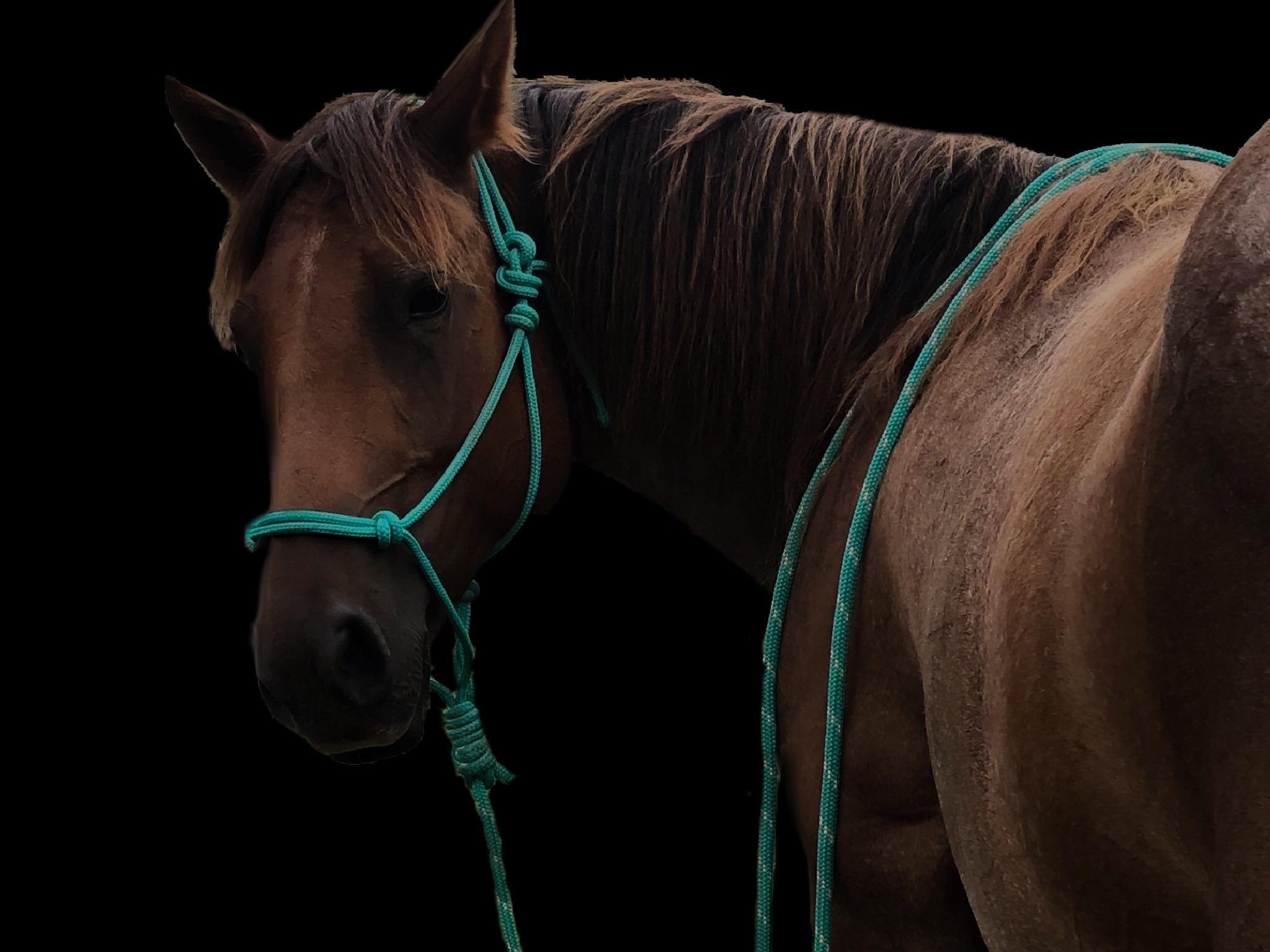 Equine Rope